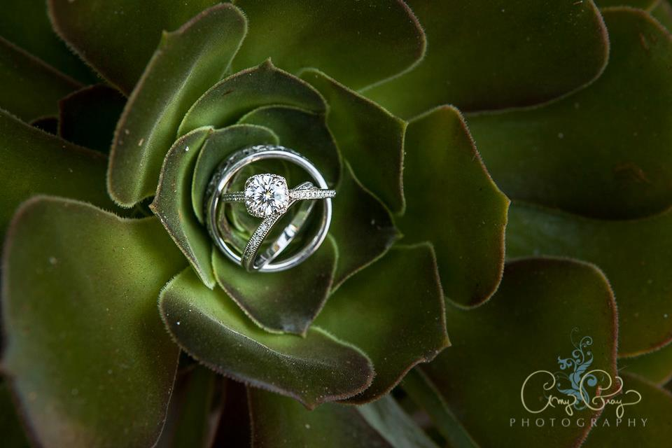 Cactus Ring Shot