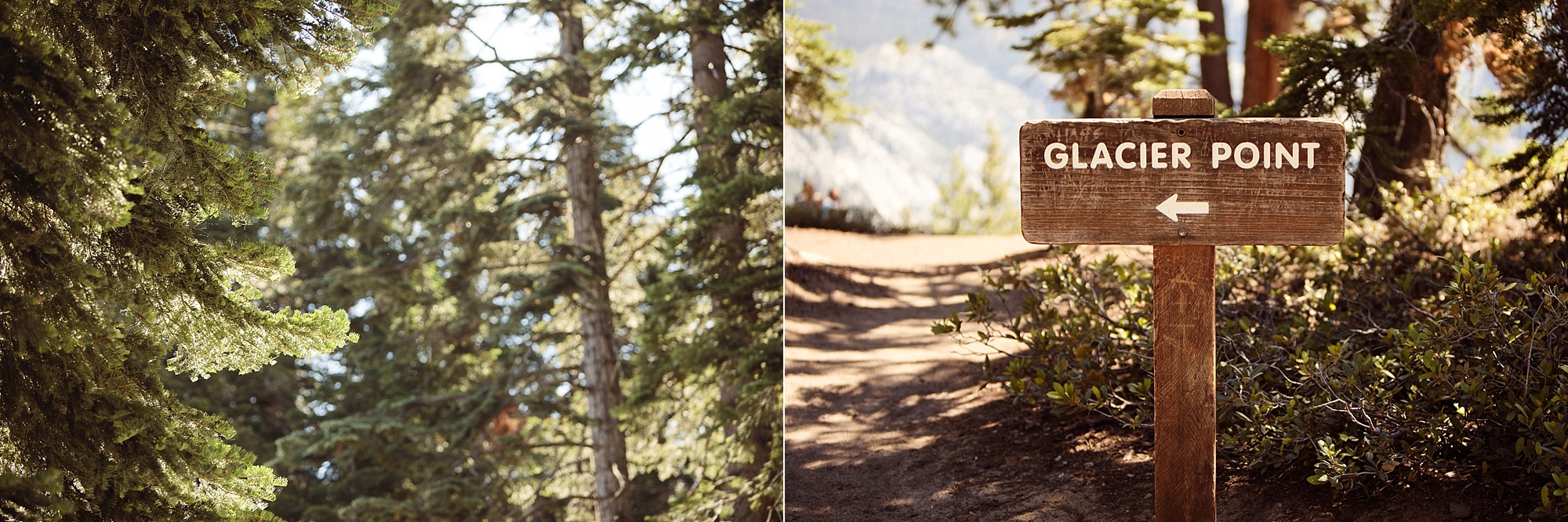 Yosemite | Amy Gray Photography