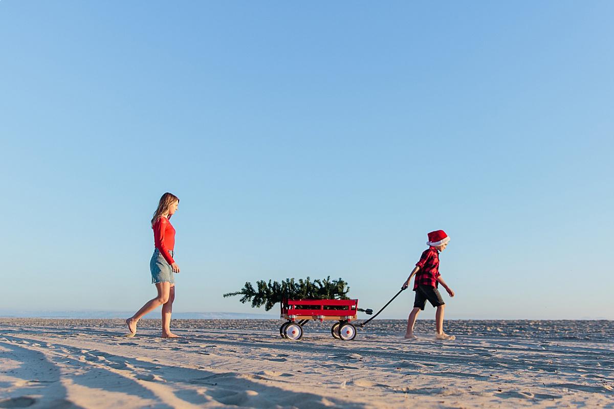 Christmas Tree Photos on the Beach