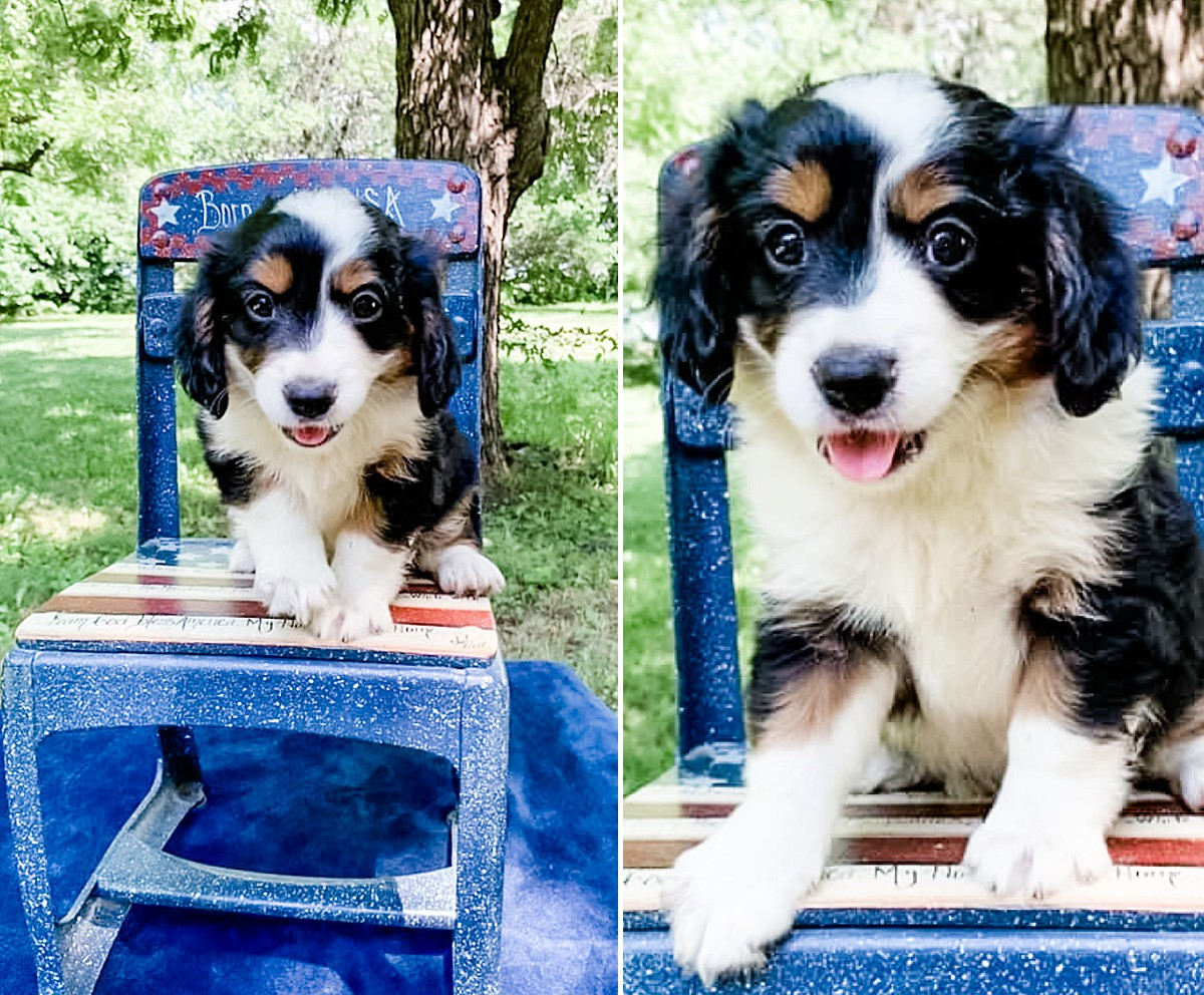 Marley the Aussalier | Dog Potty Spot