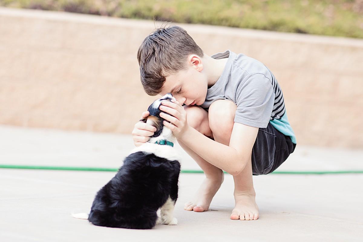 Aussalier Puppy   Marley the Aussalier