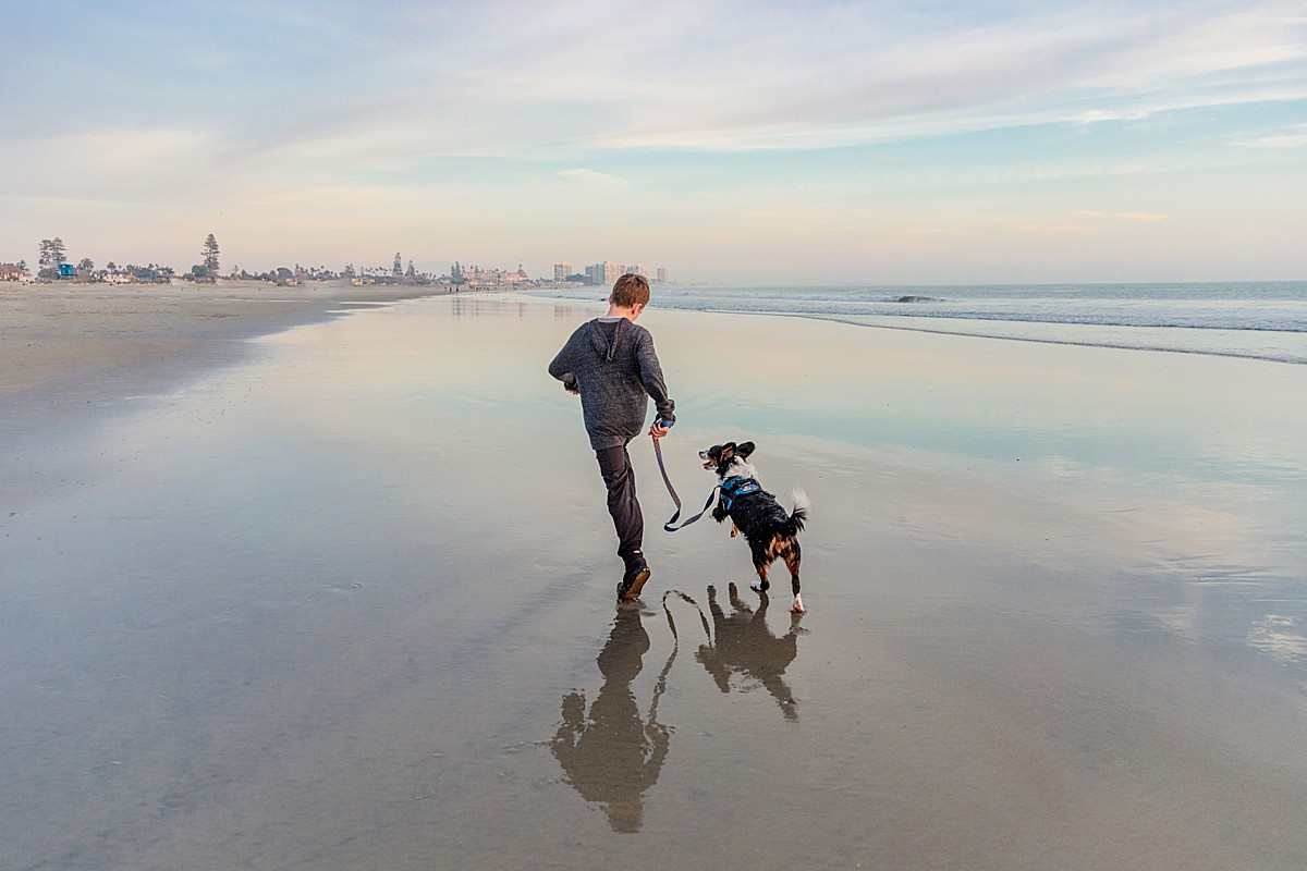 Coronado Photographer | Aussalier Puppy