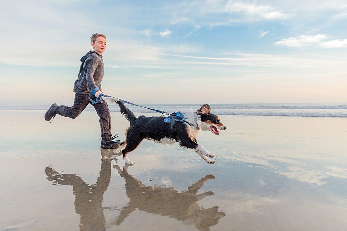 San Diego Photography | Aussalier Puppy
