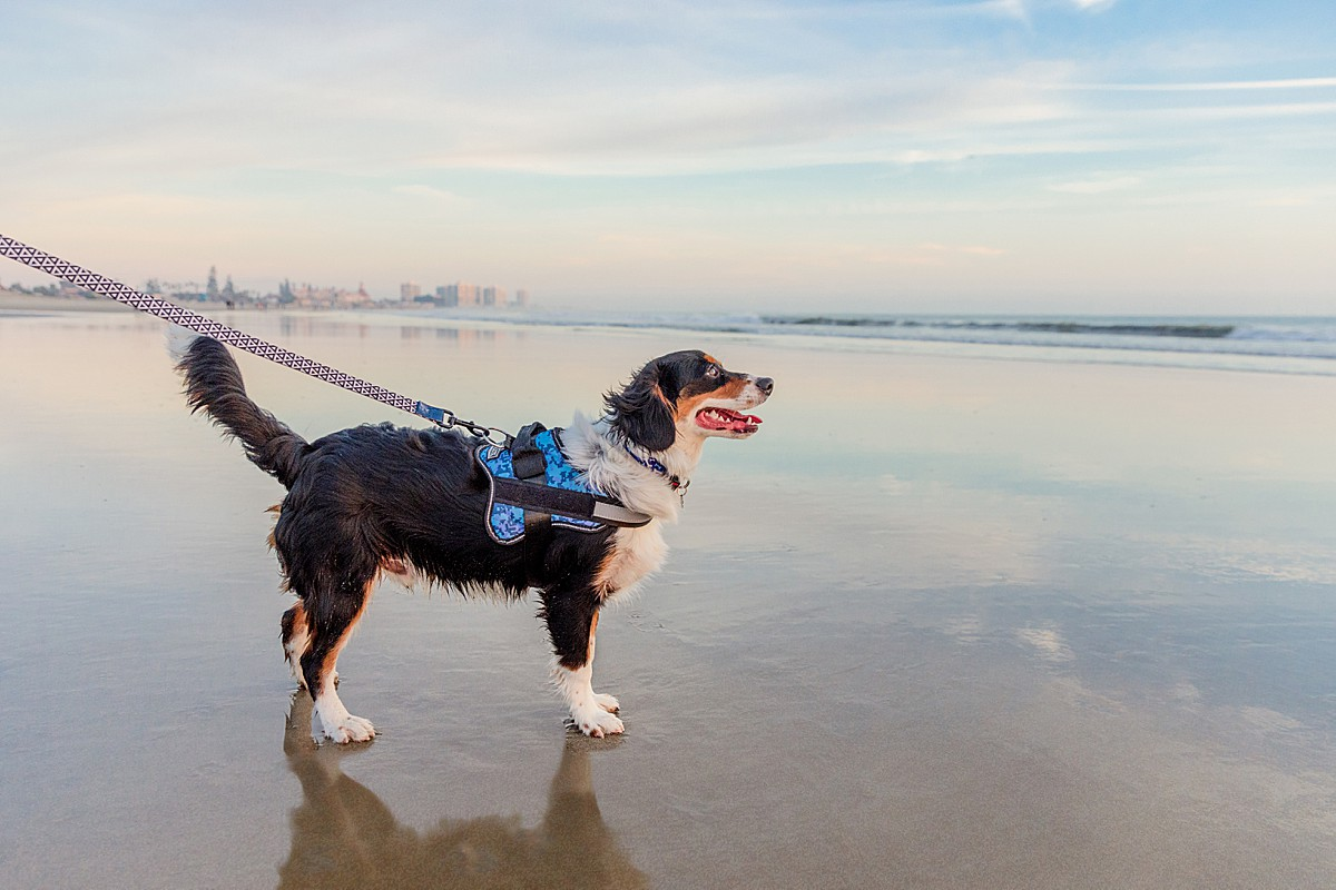 Photographers in San Diego | Dog Beach Photography
