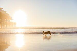 San Diego Dog Photography